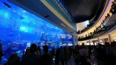 The Dubai Mall in United Arab Emirates UAE — Stock Video