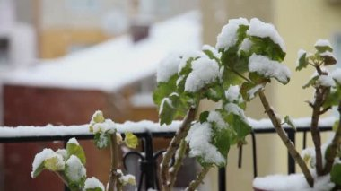 Snow Fall 4 HD 1080p — Stock Video