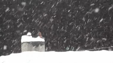 Snow Fall 3 HD 1080p — Stock Video