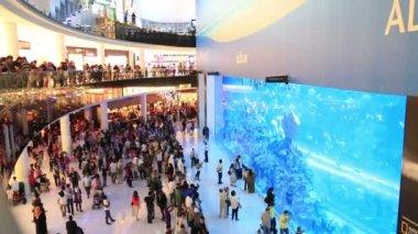 The Dubai mall aquarium 2 — Stock Video
