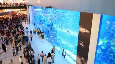 The Dubai mall aquarium — Stock Video