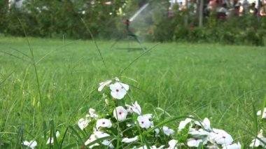 Gras sprinkler drenken — Stockvideo