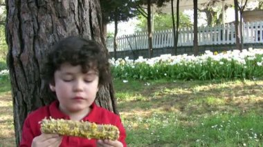 Little Boy eating corn — Stock Video