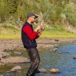 Fisherman catches a salmon in the north river. — Stock Photo #73466489
