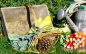 Vegetables in the kitchen garden,Radish, carrot, endive, leek — Stock Photo