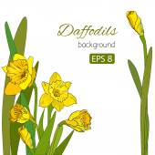 Vintage card with cute daffodils on white background — Stock Vector
