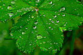 Dew drops on the leaves — Stock Photo