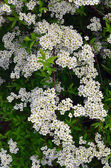 Textura. flores — Foto de Stock