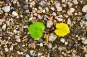 Summer and autumn — Stock Photo