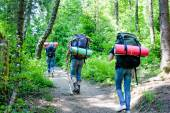 Young people hiking with backpacks in forest — Stock Photo