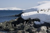 Antarctica, Cuverville Island — Stock Photo