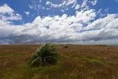 Tussac Grass, Falkland Islands — Stock Photo