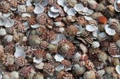 Plenty of Mussels close up — Stock Photo