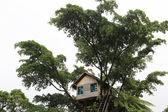 Tree House, Vanuatu — Stock Photo