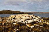 Coastline Falkland Islands — Stock Photo