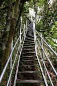 Steep stairs in the rainforest — Stock Photo