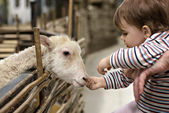 A girl and a sheep — Stock Photo