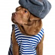Red dog sailor on a white background — Stock Photo #75153727
