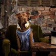 Dog radioman in retro style — Stock Photo #75154029
