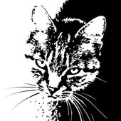 Cat striped black and white portrait — Stok Vektör
