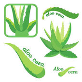 Aloe vera icon set — Stock Vector