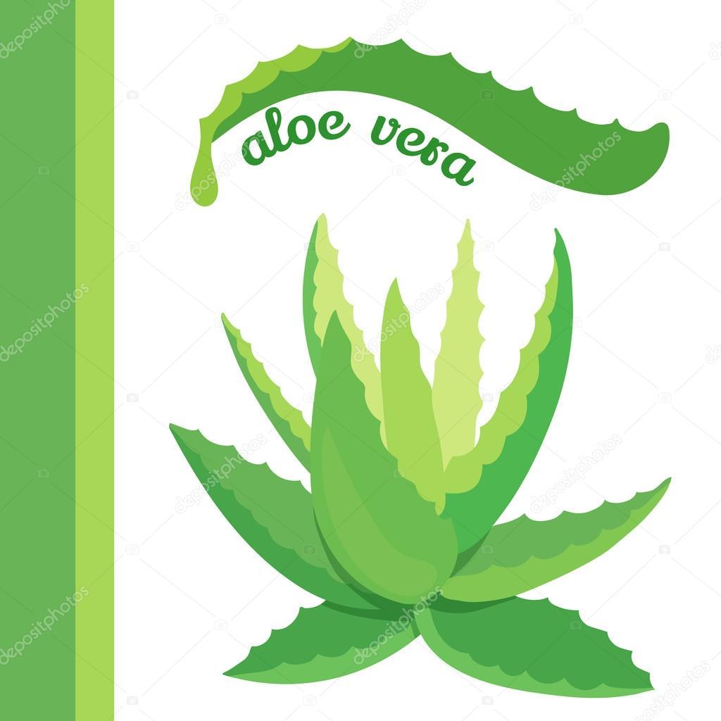 Aloe vera para perros y aloe vera symbol stockvektor 169 - Cuidados planta aloe vera casa ...