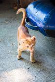 Funny little ginger kitten on the island of Thassos — Stock Photo