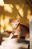 Engraçado gatinho gengibre sobre a ilha de Thassos — Fotografia Stock