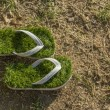 Global warming environment, last green flip flops isolated on dried grass — Stock Photo #73642929