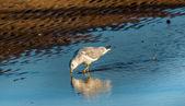 Seagull Reflections — Stock Photo