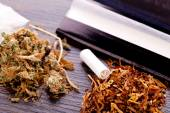 Dried Cannabis on Rolling Paper with Filter — Stock Photo