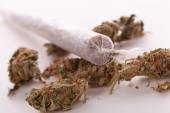Close up of dried marijuana leaves and joint — ストック写真