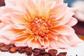Kávová zrna a květinovou výzdobu — Stock fotografie