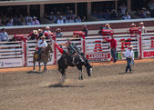 Bareback rodeo on a horse at calagary stampede — Stock Photo
