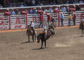 Bareback horse rodeo at calagary stampede — Stock Photo