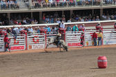 Bullriding on a black and white bull at calagary stampede — Stock Photo