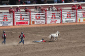 Kids catching pony at calgary stampede — Stock Photo