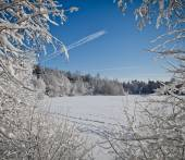 Lake in the winter forest — Stock Photo