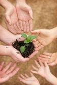 Seedling growing in hands — Stock Photo