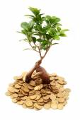 Small seedling growing from coins — Stock Photo