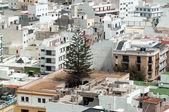 Lonely tree between buildings — 图库照片