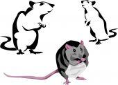 Black rat — Stock Vector