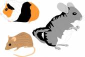 Rodents — Stock Vector
