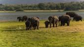 Elephant watching on a safari game drive — Stock Photo