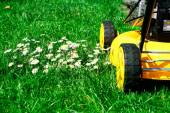 Lawn mower and daisies — Stock Photo