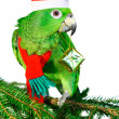 Green amazon parrot holding a golden gift parcel — Stock Photo #74471549