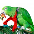 Green amazon parrot with a golden bell sitting on a Christmas tree — Stock Photo #74471551