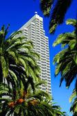 Palmen und Wolkenkratzer in San Francisco — Stockfoto