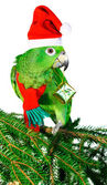 Green amazon parrot holding a golden gift parcel — Stock Photo