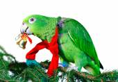 Green amazon parrot with a golden bell sitting on a Christmas tree — Stock Photo